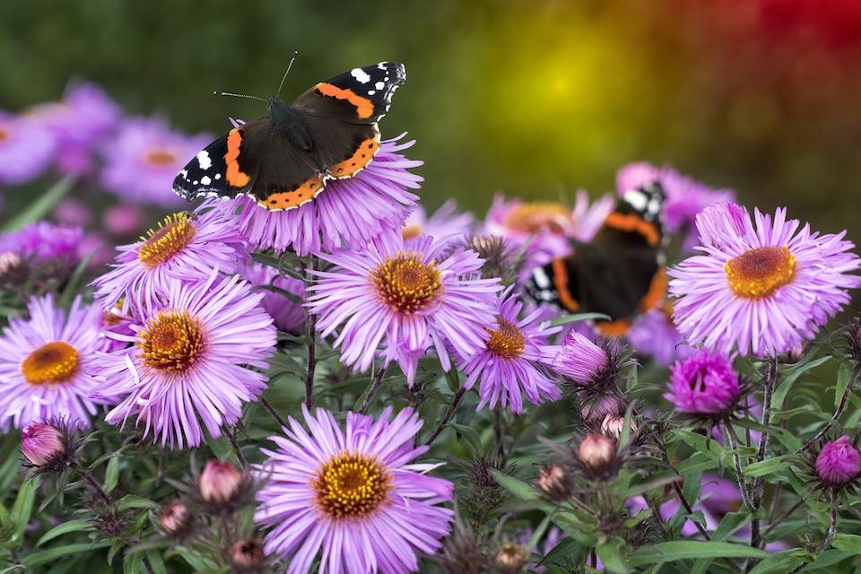 Butterfly Garden places to see animals in Ireland