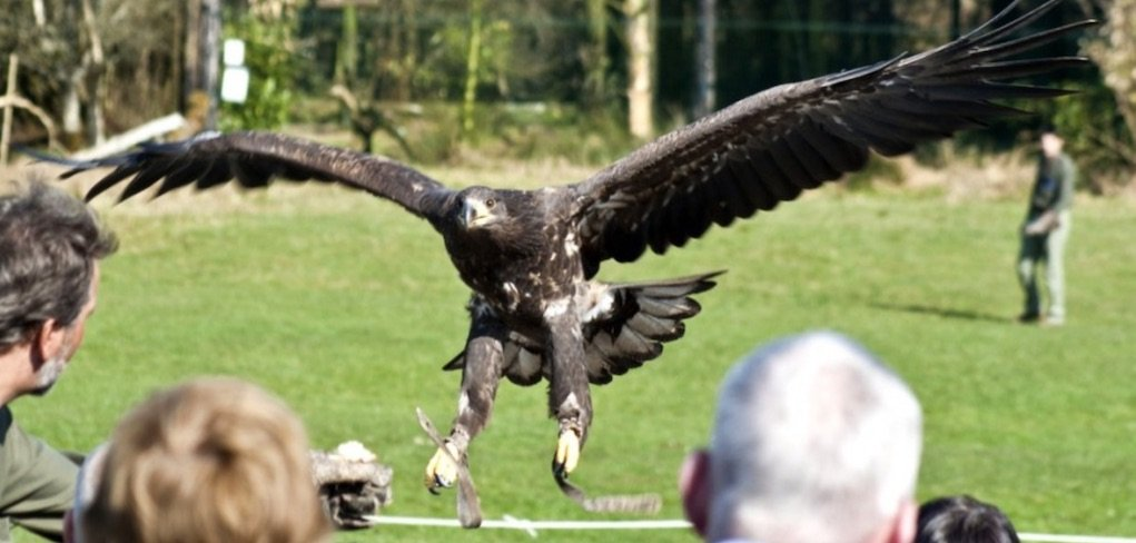Eagles Flying Sligo places to see animals in Ireland