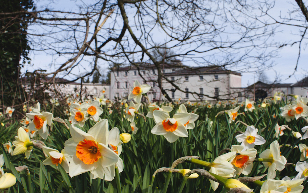 Strokestown House with daffodils Spring walks for families in Ireland