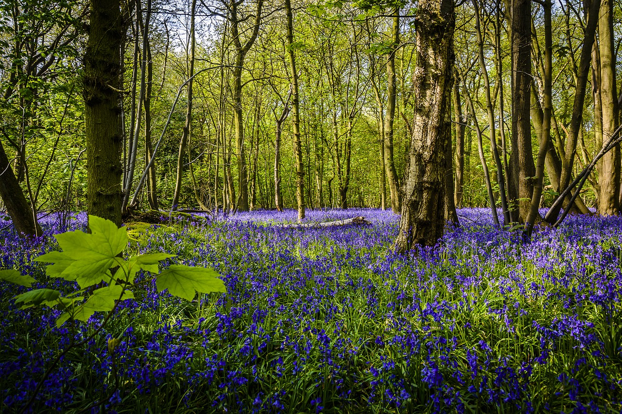 The Best Places To See Bluebells In Ireland