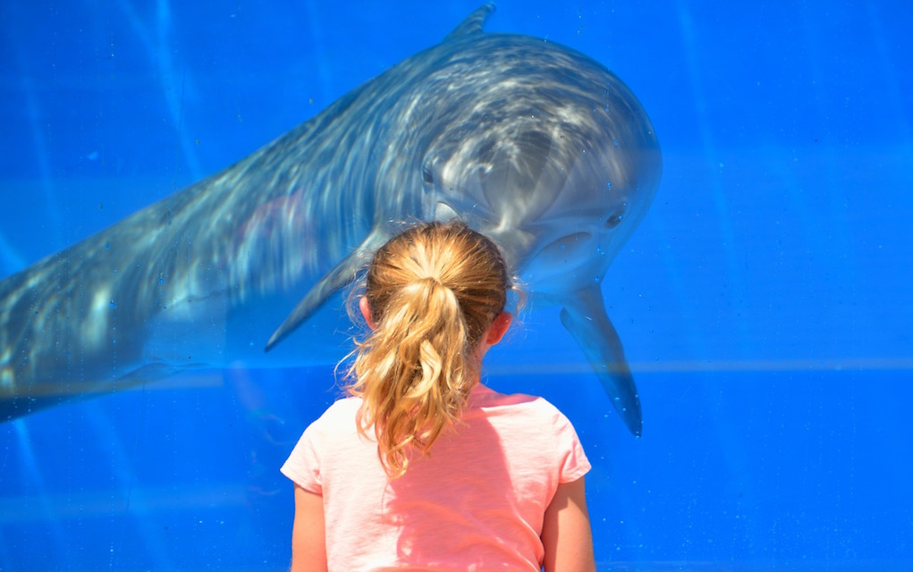 girl with dolphin places to see animals