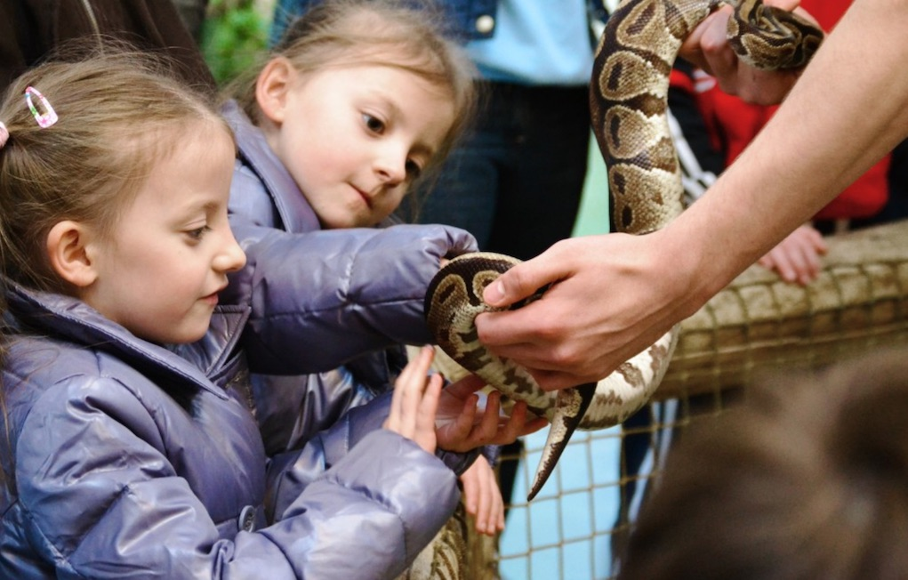 national reptile zoo Kilkenny places to see animals
