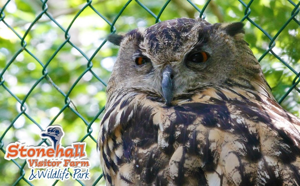 stonehall visitor farm and wildlife park places to see animals in Ireland