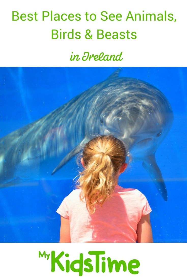 Best places to see animals in Ireland