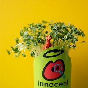 Innocent cress head ideas to introduce your child to grow your own