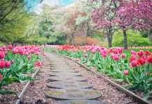 Spring walks for families in Ireland