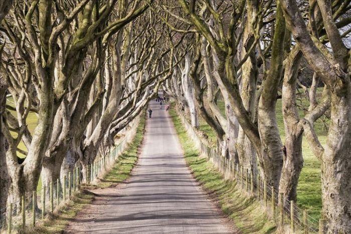dark hedges ballymoney