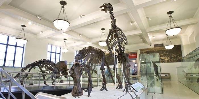 hall-of-ornithischian-dinosaurs american museum of natural history