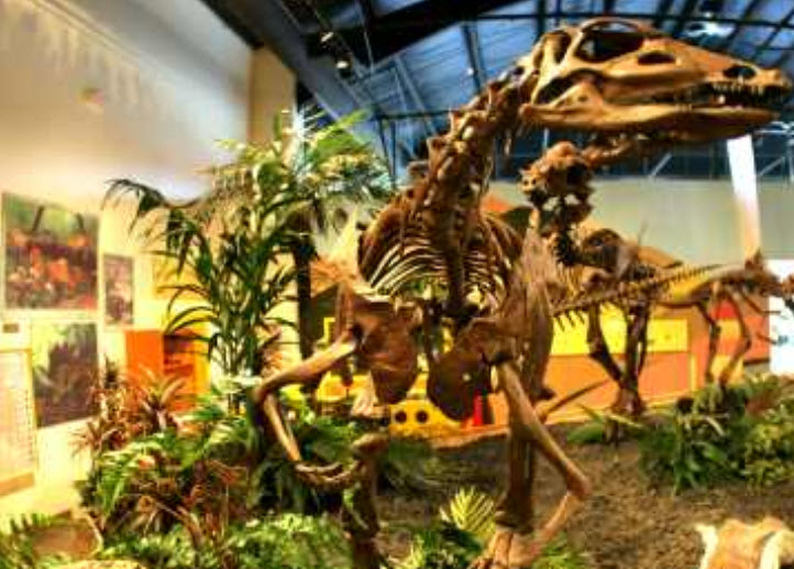 rocky mountain dinosaur center