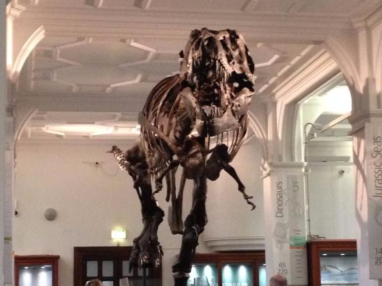 stan the t rex at manchester museum