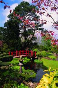 Irish National Stud Japanese Gardens Hanami Festival