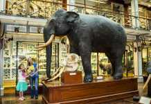 NMI Natural History Museum African Plains