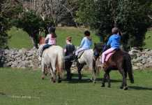 Slieve Aughty pony ride to EF win a fun family day out