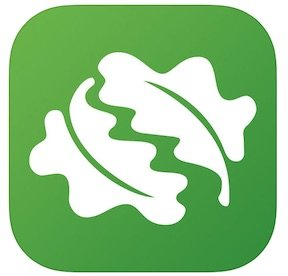 Woodland Trust Tree ID App best apps to plan a family day out