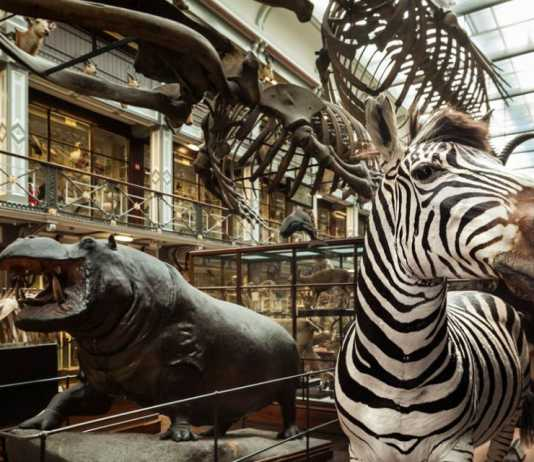 National Museum of Ireland Natural History