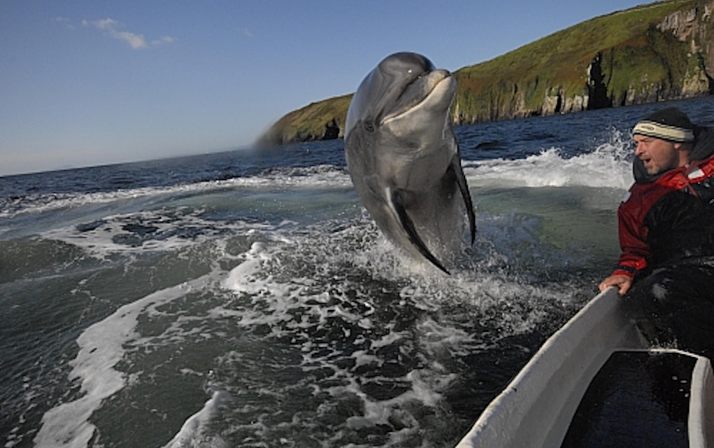 Dingle dolphin tour for boat tours