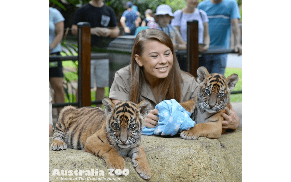 Australia zoo for things to do in BRisbane