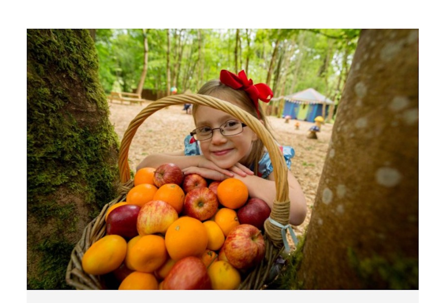Savour Kilkenny Fruits of the Forest Family Foraging at Castlecomer Discover Park