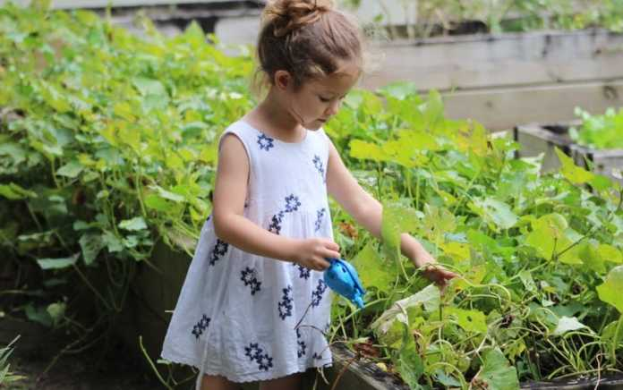 how to create a child friendly garden grow your own area