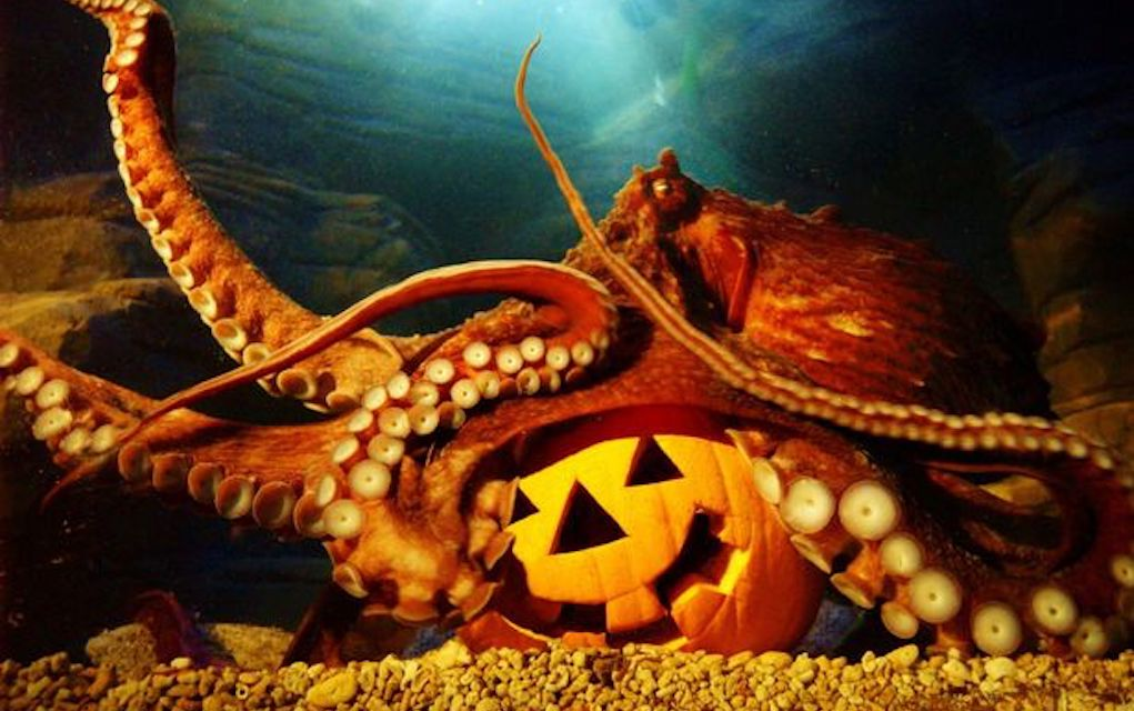 Blue Planet Aquarium Chester for Halloween events in the UK