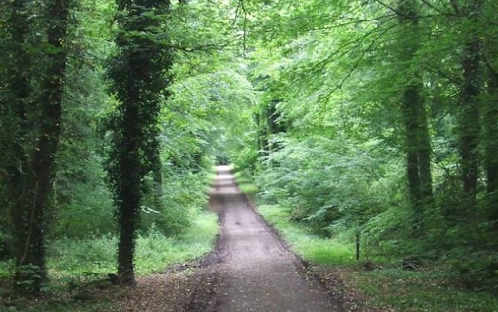 Donadea Forest Park for Free Things to Do in Ireland