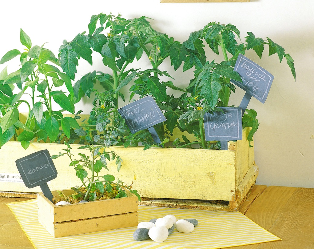 indoor gardening tips to get kids into gardening