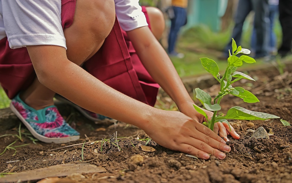 tips to get your kids into gardening