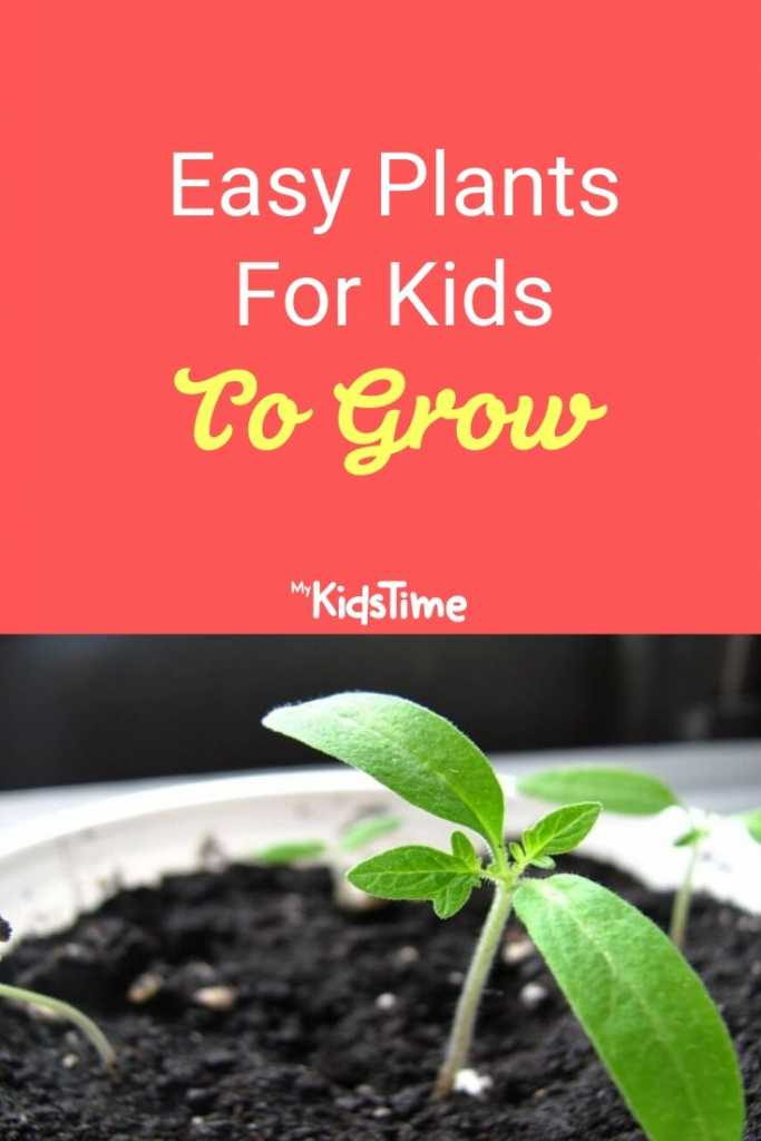 Easy Plants For Kids To Grow