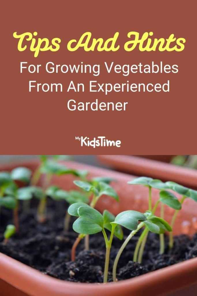 Tips And Hints For Growing Vegetables From An Experienced Gardener