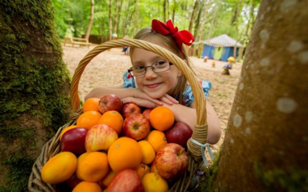 castlecomer fruits of the forest foraging event