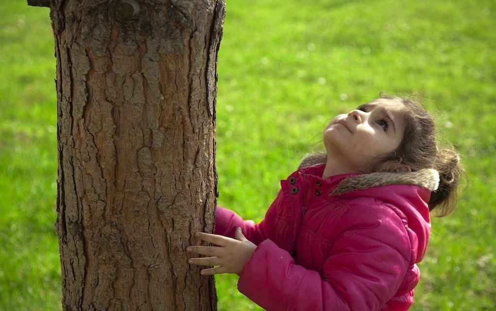 How to measure a tree engineering activities to do at home