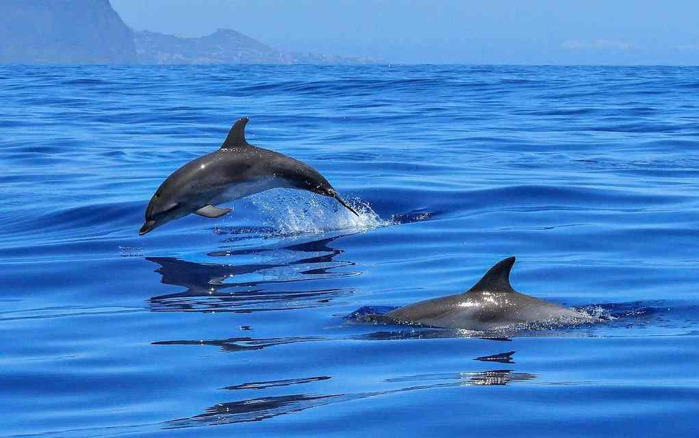 dolphin watching in Ireland