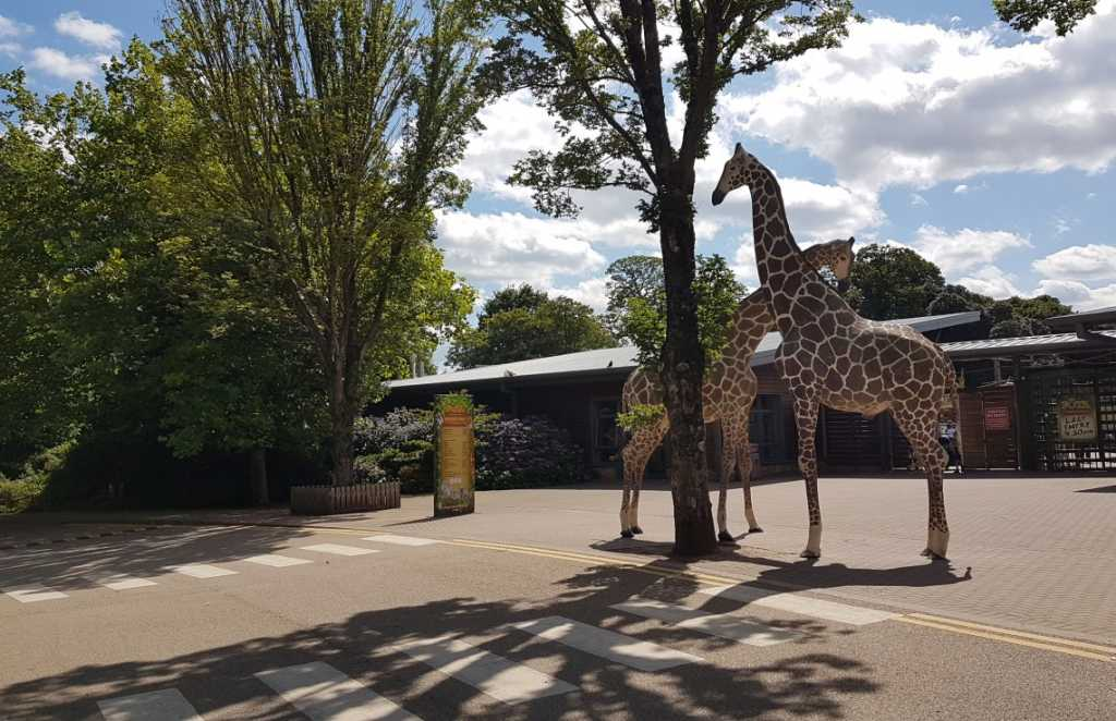 fota wildlife park discover centres in Ireland for STEM