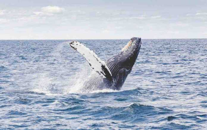 whale watching trips in Ireland
