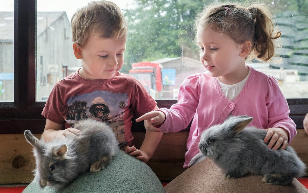Godstone Farm - Mykidstime animal parks in the UK