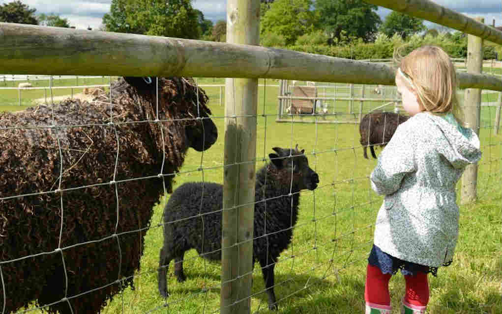 Hatfield Park Farm - Mykidstime animal parks in the UK