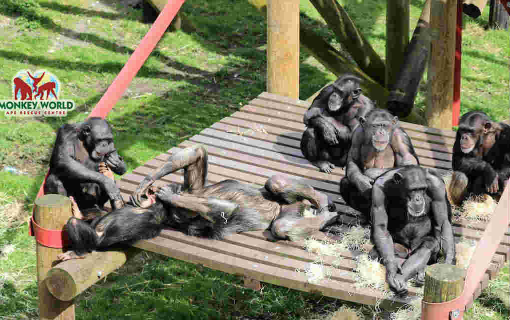 Monkey World - Mykidstime animal parks in the UK