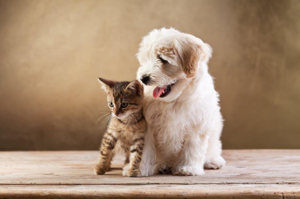 7 Top Tips For Pet Holiday Care