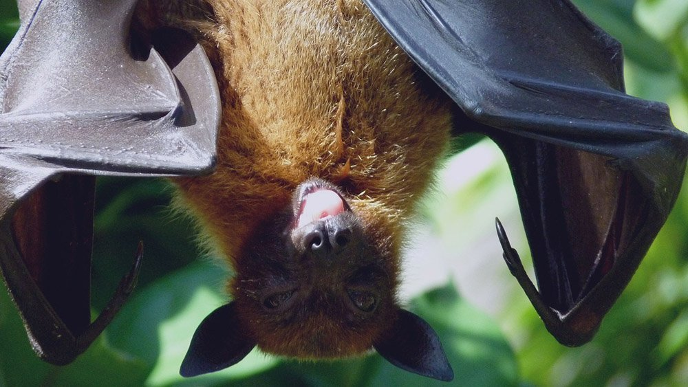 Batty about bats nmi country life things to do and what's on for families in Ireland
