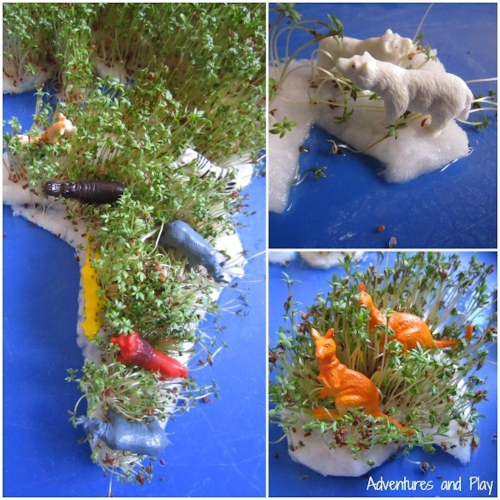 Countries-sensory-play grow your own cress map from adventures and play