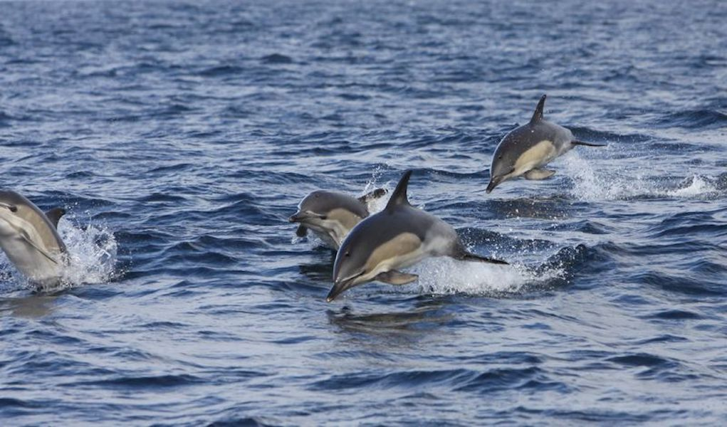 Dolphins on the Wild Atlantic Way family vacation Ireland