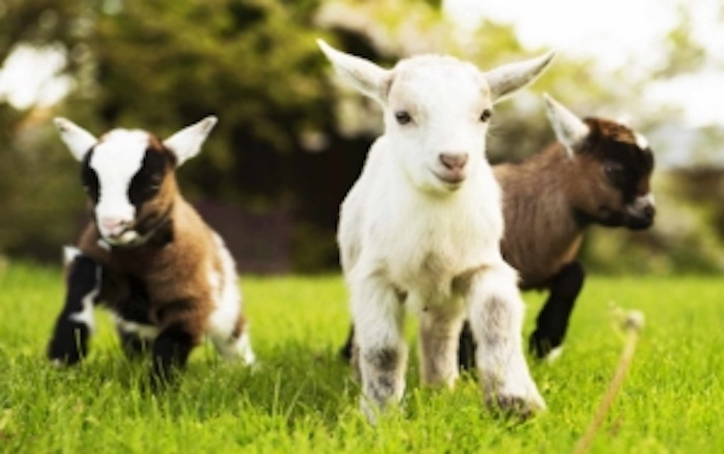 Easter and lambing at Newgrange Farm Meath