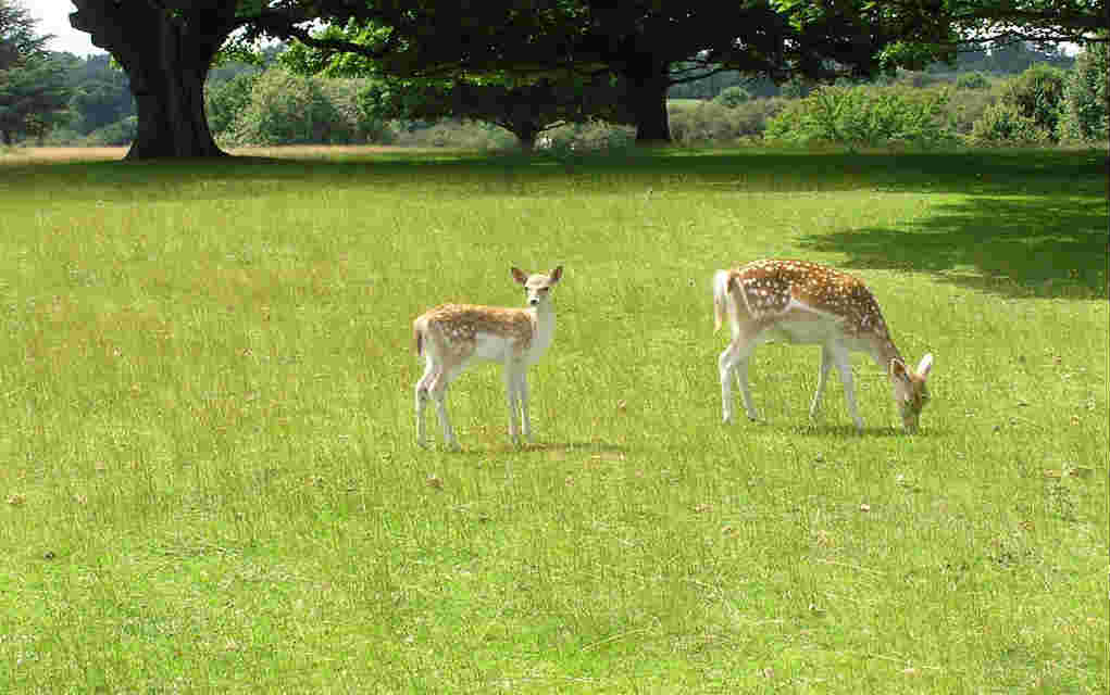 Knole Deer Park for fun family walks in the UK - Mykidstime