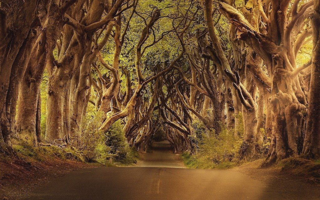 The Dark Hedges Northern Ireland Causeway Driving Route road trips around Ireland