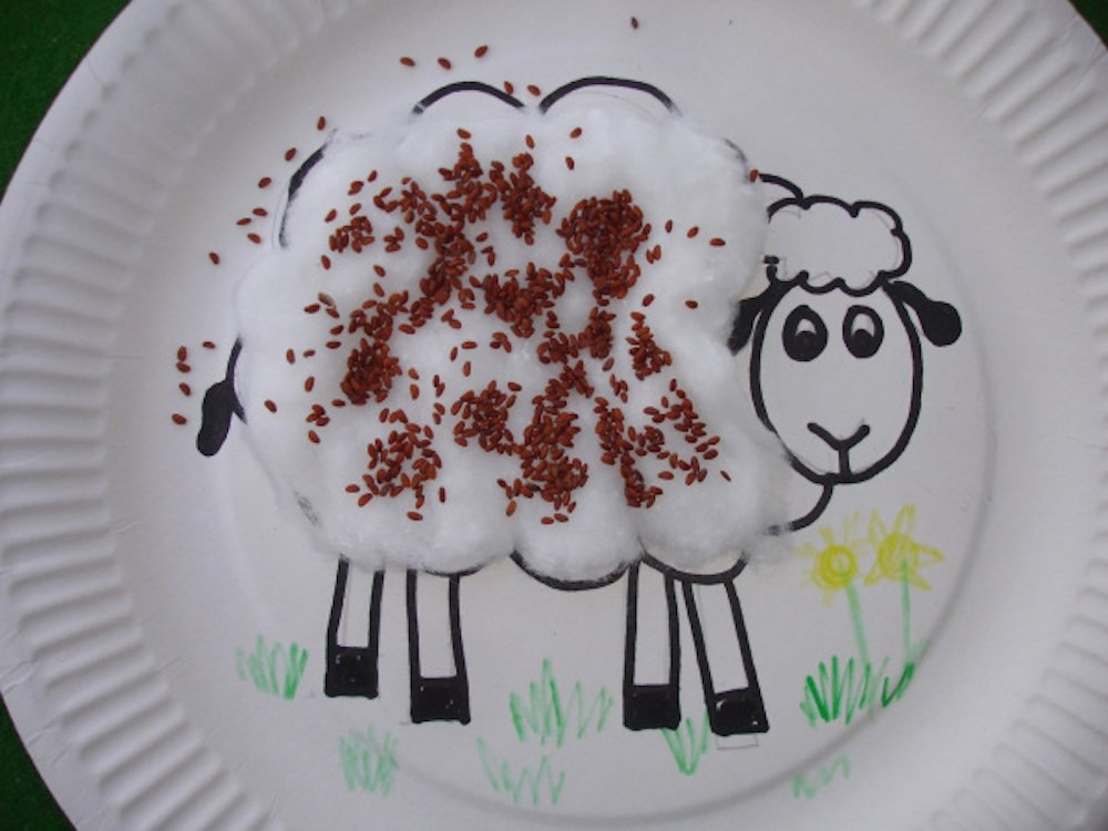 grow your own cress-cotton-wool-lamb from gardening with children blog