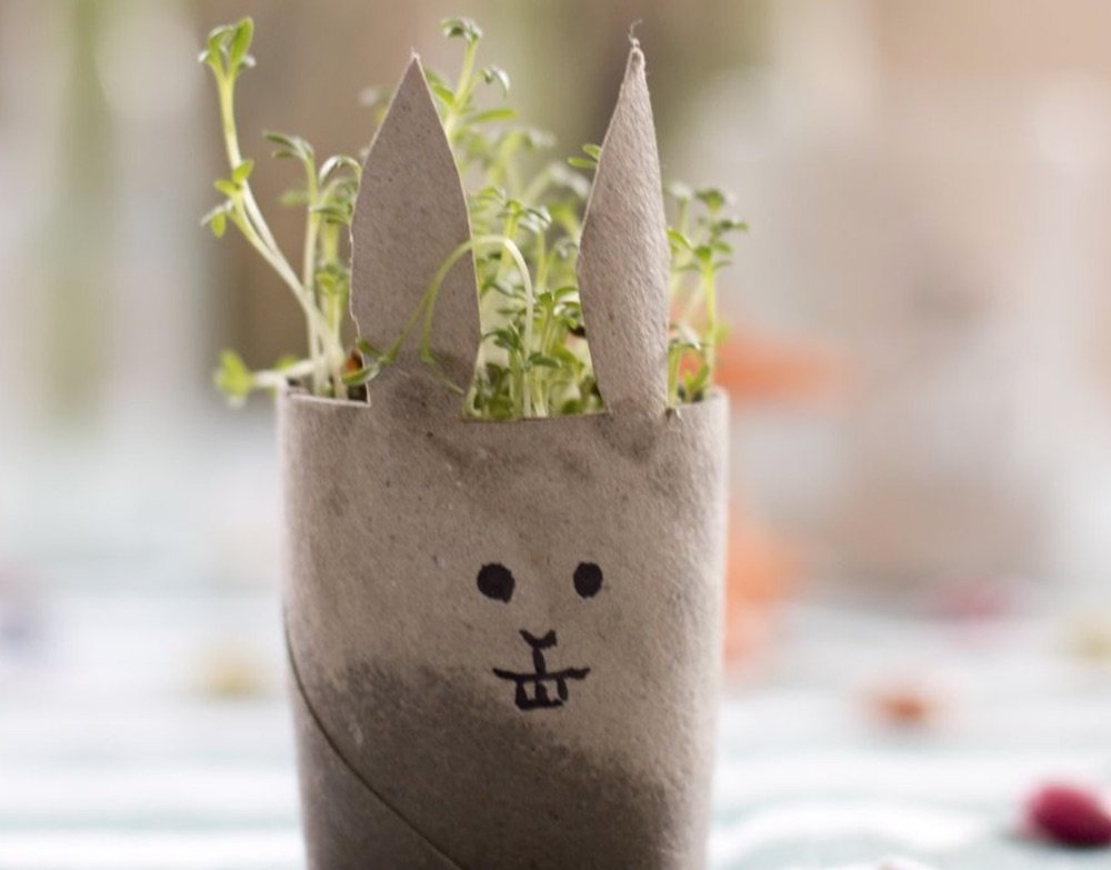 grow your own cress bunny from look what i made