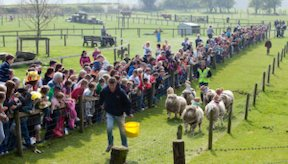 sheep stakes at Newgrange Farm things to do at Easter in Ireland What's on