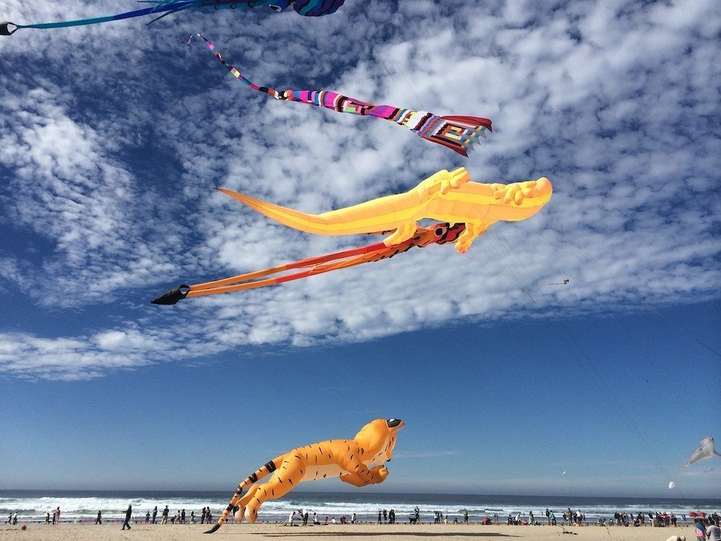 Kite Flying Fun family events in Ireland by the water