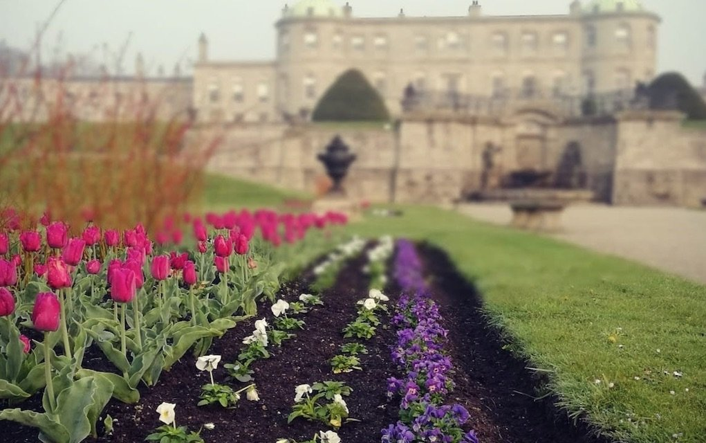 Powerscourt Tulip Festival Things to do with kids