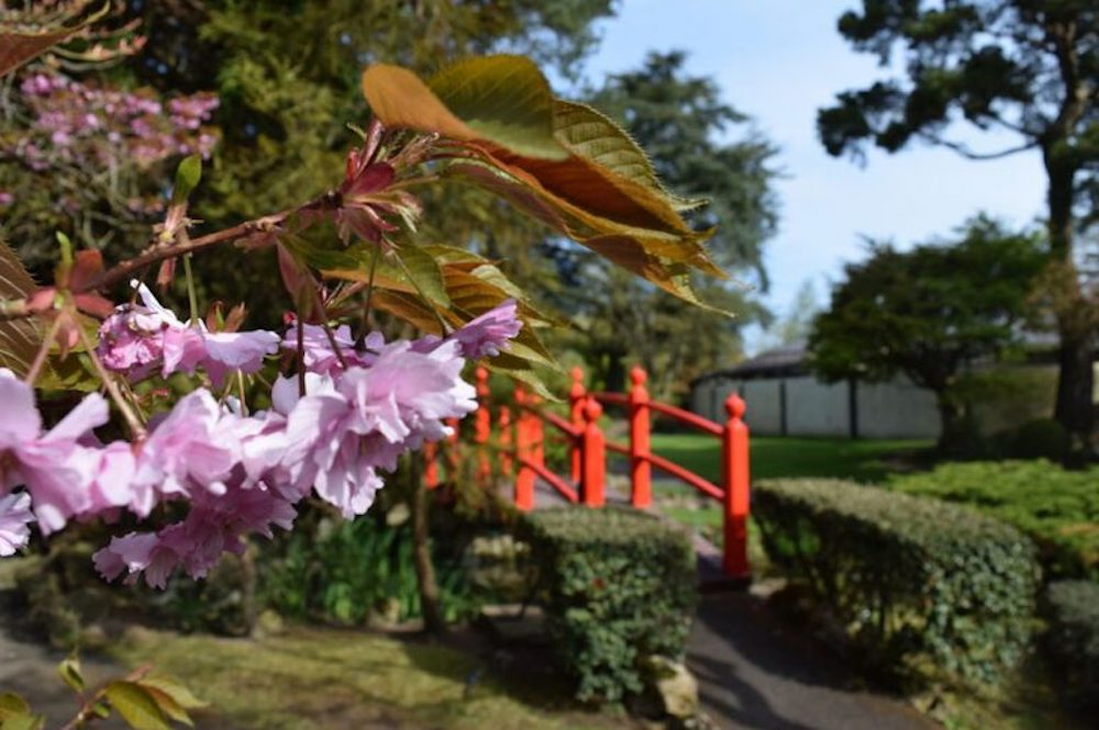 The Japanese Gardens INS
